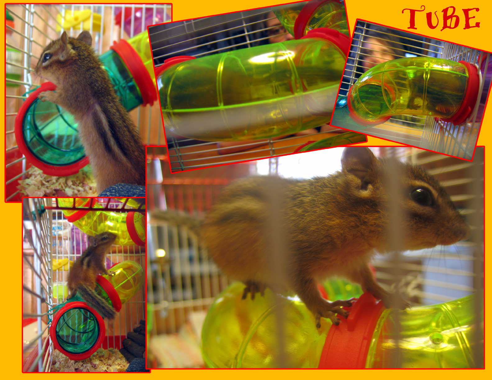 Hamsters Free Porn Tubes 33