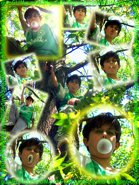 Bubble Blowing in a Tree
