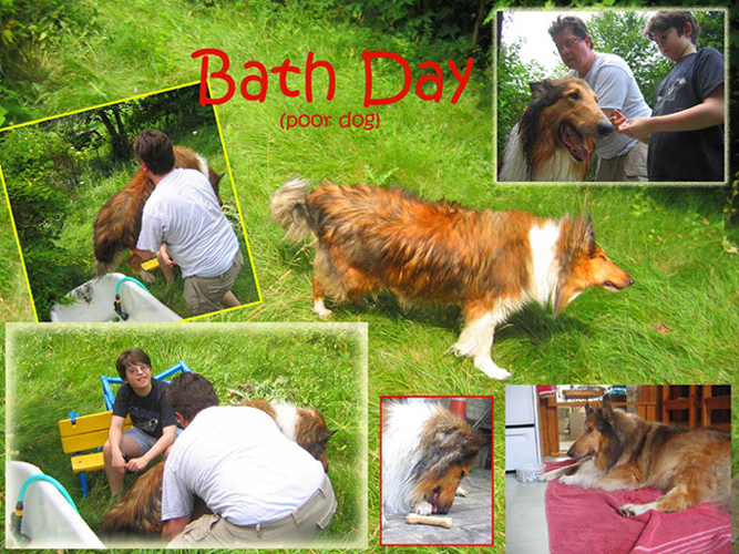 Poor Dog: A collie is subjected to a backyard bath.
