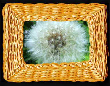 Digital Basket frames a dandelion fluffball.