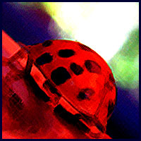 Highly filtered and colour intensified, this diagonally placed image of a ladybug appears to be making a steep ascent.